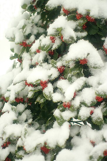 Holly Berries In Snow by Arteffecting