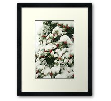 Holly Berries In Snow Framed Print