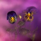 Pansies Purple Mist by Diane Schuster