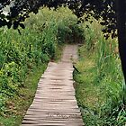 iPHONE Case - South Africa - Wooden Path by mrparkini