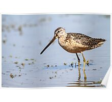 Long-billed Dowitcher: Muddy Waters Poster