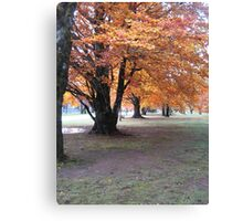 Trees in the Fall Canvas Print