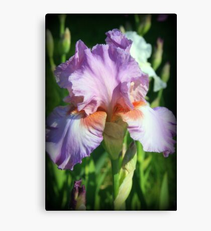 Springtime Favorite Canvas Print