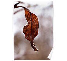 Veiny Leaf Poster