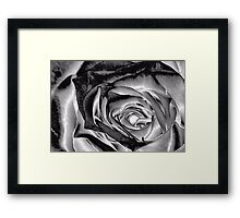 Sterling Rose Framed Print