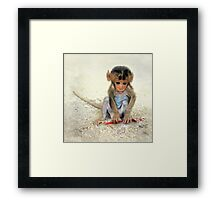 Young macaca Framed Print