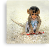 Young macaca Canvas Print