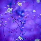 Wild flower by Joseph D'Mello
