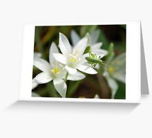 small flower with insect Greeting Card