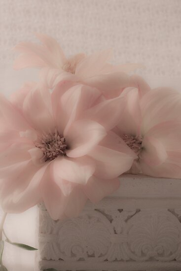Dahlias - Oh So Soft! by Sandra Foster