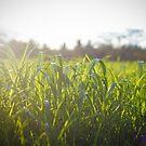 Grass by Joseph D'Mello
