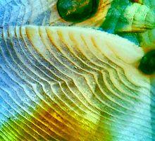 Baby Bird In Folded Wings (macro abstract) by Charldia