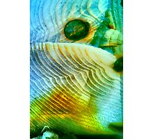 Baby Bird In Folded Wings (macro abstract) Photographic Print