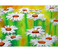 Daisy Day Photographic Print