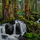 The Refreshing by Charles & Patricia   Harkins ~ Picture Oregon