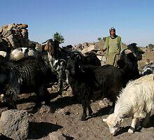 Yayla Goats II by Jens Helmstedt