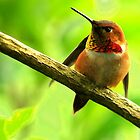 LITTLE HUMMER by RoseMarie747