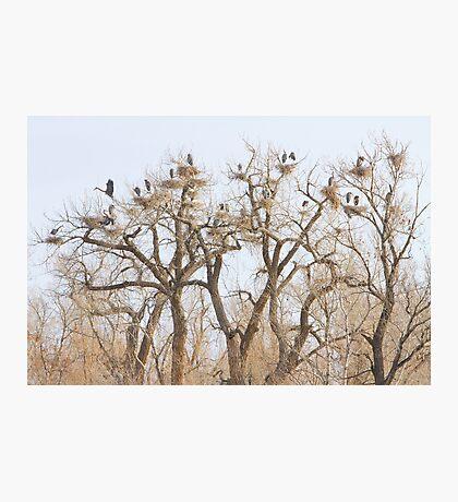 Great Blue Heron Hangout Photographic Print