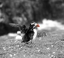 Fluffin' Puffin by spowell85