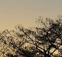 silhouette dream by Elizabeth Weber