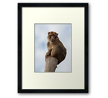 Lonely macaque Framed Print