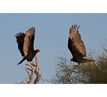 Two Vultures Photographic Print