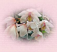White Cymbidium Orchids by MotherNature2