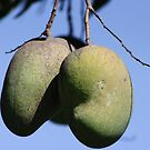 Mangoes by dsimon