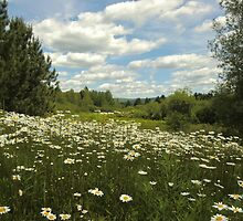 Endless Daisies by Kathleen Daley