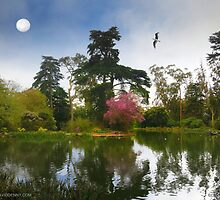 Restful Stow Lake by David Denny