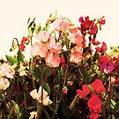 More than Pretty by elaine1898