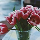 Tulips on film by Justine Gordon
