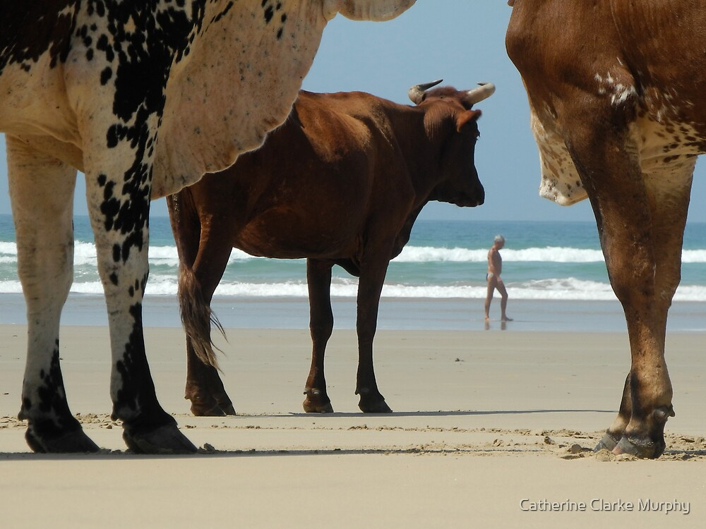Cows on the Beach by Catherine Clarke Murphy