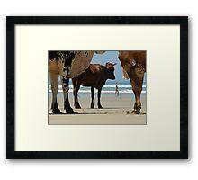 Cows on the Beach Framed Print