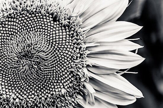 Meeting the Flower  by IamPhoto
