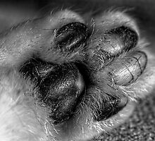 Much More Paw by Andrew Pounder