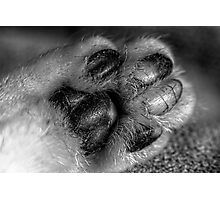 Much More Paw Photographic Print