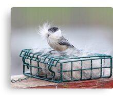 "A ""Bearded Chickadee "" ??? Canvas Print"