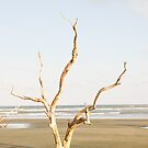Driftwood Pointing Toward Ocean by dbvirago