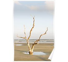 Driftwood Pointing Toward Ocean Poster