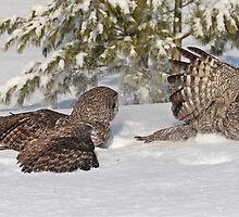 Fight or Flight by Heather King