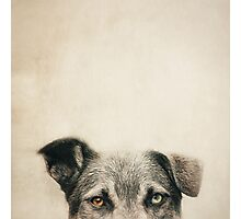 Half Dog Photographic Print