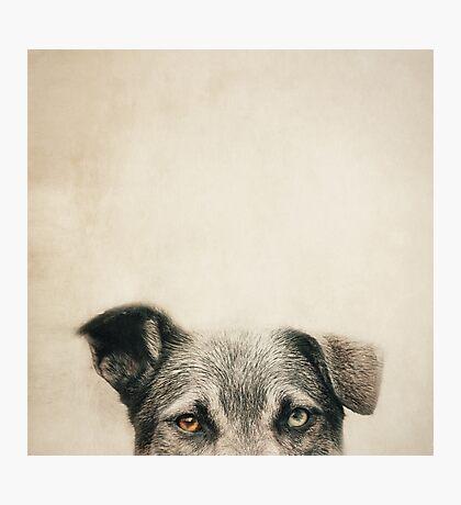 Half Dog Photographic Print