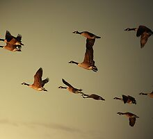 Early Morning Flight by CharlotteMorse