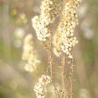 Dried Wildflower by Arteffecting