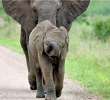 I CAN'T WALK FASTER! THE AFRICAN ELEPHANT – Loxodonta Africana - Afrika Olifant by Magaret Meintjes