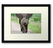 I CAN'T WALK FASTER! THE AFRICAN ELEPHANT – Loxodonta Africana - Afrika Olifant Framed Print