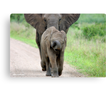 I CAN'T WALK FASTER! THE AFRICAN ELEPHANT – Loxodonta Africana - Afrika Olifant Canvas Print