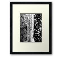 Holly and bark Framed Print