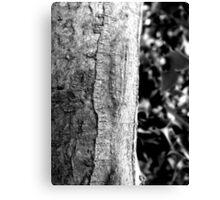 Holly and bark Canvas Print